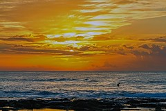 Morning Contrasts (Sterling67) Tags: 2470 sunrise water ocean seagulls rocks clouds