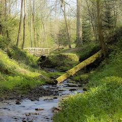 Pretty green (Happy snappy nature) Tags: landscape shropshire nature outdoors sunnyday greengrass stream water bridge