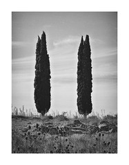 II (eduardo.mazzeo) Tags: twotrees monocromos monochrome bw trees árboles