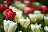 DSC02467 (terryw002) Tags: zeiss zeiss135 zeissapo flower nature flowers garden