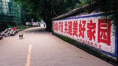 2014 9 Xing Ping (8) (SirLouisLau95) Tags: china spring guilin yangshuo     xingping