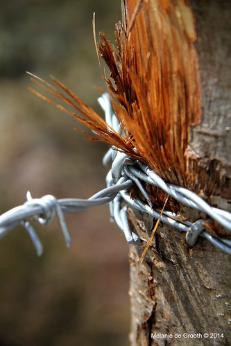 Barbed Wire on a Post 2