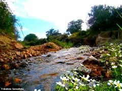 Riacho (AndreiaFMS) Tags: flowers flores verde portugal nature fauna flora natureza flor paisagem campo alentejo florido erva ervas