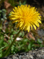 DSCN0147 (HannahBarbara96) Tags: camera blue bird nature eyes nikon focus natural blossom daisy hd humming