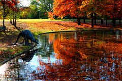 Autumn magic and two thirsty kangaroos. #localscan #humanbrochure (Wanderlust_73) Tags: trees sculpture pond australia autumnleaves canberra kangaroos commonwealthpark uploaded:by=flickrmobile flickriosapp:filter=nofilter humanbrochure localscan