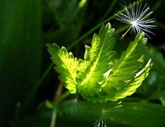 Spring me joy (vegeta25) Tags: green nature spring fuji fujifilm myfuji mothernatureatherbest s5800 52weeksthe2014edition weekstartingwednesdaymay72014