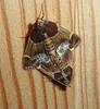 Mites osent (domiloui) Tags: house macro animals flickr animaux maison insolite insectes cooliris abaucourt naturallive