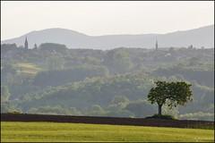 Là-bas, tout au loin ... (Excalibur67) Tags: trees tree landscape nikon arbres paysage tamron arbre paysages d90 flickrdiamond sp70300divcusd