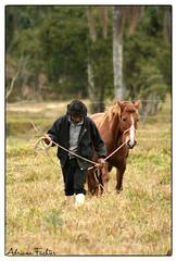 af0706_0992 (Adriana Fchter) Tags: horses naturaleza nature animal fauna mammal farm wildlife natureza natur natura cavalos cavalo mammalia tier reino mammifre mamfero  mamferos campolina crioulo   sugetiere  aard   mammiferi      animlia