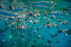 Snorkel (aka Buddy) Tags: vacation holiday spring og barbados 2014