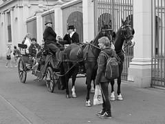 Paardenkoets / Astrid / Den Haag (rob4xs) Tags: blackandwhite bw horse holland netherlands monochrome nederland thenetherlands denhaag astrid pferd thehague paard zw horsecarriage paleisnoordeinde pferdekutsche paardenkoets