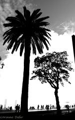 "Nice - ""French Riviera"" (Corinne DEFER - DoubleCo) Tags: sunset bw black france blancoynegro clouds landscapes photo nice artistic noiretblanc cloudy horizon nb ctedazur paca ciel provence passage nuages paysage paesaggi paysages contrejour palmier paisagens landschaften frenchriviera promenadedesanglais alpesmaritimes corinnedefer updatecollection"