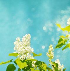 White Dreams (mintukka) Tags: flowers blue summer white flower texture square bokeh textures lilac dreamy syringa
