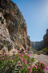 Crete-87 (kayteeknee) Tags: pink flowers mountains landscape rocks hiking greece crete gorge greekislands rethymno rethymnon greekisland preveli monipreveli