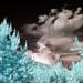 Pine against Sky - 665nm IR