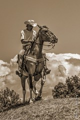 quitation Western (Alain Cachat) Tags: show horse france sepia cheval nikon cowboy chapeau western cavalier 105 rider stetson horseriding spia horseman horsemanship quitation d610 drme rhnealpes westerndays autichamp westerndream imapoorlonesomecowboy extrmecowboyrace