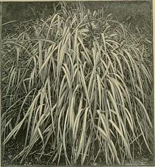 Anglų lietuvių žodynas. Žodis lyme-grass reiškia n bot. rugiaveidė lietuviškai.