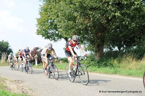 Geel Oosterlo  (113)