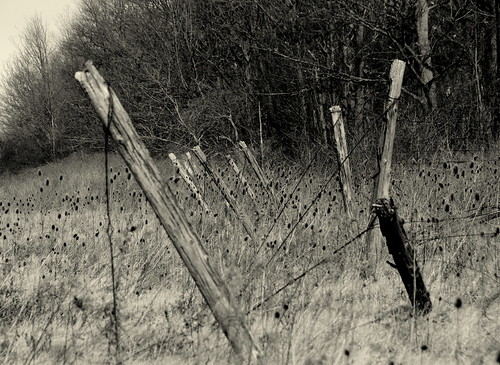 Abandoned Vineyard
