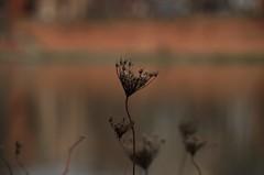 Toulouse (31) (FloLfp) Tags: toulouse tolosa berge garonne 31 france fleur profoudeur de champ