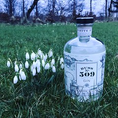 3/3.2017 - on a friday night in spring a not-so-young girl's fancy turns to gin (julochka) Tags: 365 friday garden gin snowdrops tgif