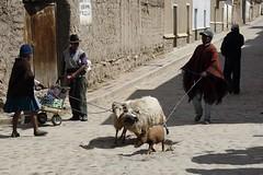 Rush hour in downtown Tarabuco, Bolvia (DepictingPhotos) Tags: bolivia southamerica street animals