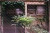 (yasu19_67) Tags: film filmism filmphotography analog minoltaα7 carlzeissjenapancolar50mmf2 50mm weed atmosphere photooftheday fujifilm superiapremium400 osaka japan
