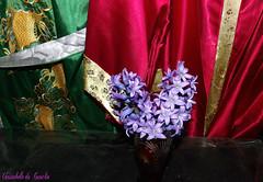 LES JACINTHES DU JARDIN !( VENANT DES BOIS ) (christabelle12300 -(très très peu présente )) Tags: languageofflowers beautifullife