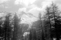 04a3371 21 (ndpa / s. lundeen, archivist) Tags: nick dewolf nickdewolf bw blackwhite photographbynickdewolf film monochrome blackandwhite april 1971 1970s 35mm europe centraleurope switzerland swiss alpine alps graubünden grisons stmoritz easternswitzerland suisse schweitz mountains peaks snow snowy snowcovered skiresort skiarea skislopes landscape sky clouds trees swissalps