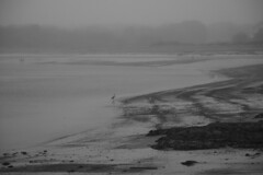 Foggy day (CTfoto2013) Tags: maine bird promeneurs people fog brouillard brume shore seaside beach plage cote borddemer paysage landscape seascape sand sable eau water rochers rocks mood foggy brumeux ambiance scarborough capeelizabeth atmosphere mystere mystery lumix gx7 panasonic nature silhouettes waves vagues newengland maree mareebasse oiseau outdoor coast ocean wave lowtide sea sky monochrome misty
