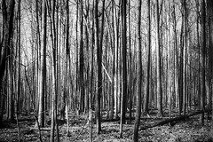 La cellule vivante/The living cell/Den levande cellen (Elf-8) Tags: forest tree vertical desolated bare contrast dark