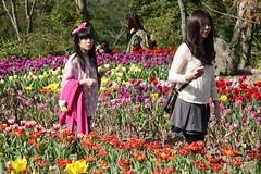 Taoyuan_20140202_113_KML3500 (Kevin Meng-Ju Liu) Tags: 2014 spring february flower tulip taoyuan 台灣 桃園 桃源仙谷 nikon d800 nikkor 28300mmf3556gvr