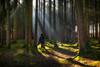 The Sound Of Silence (HSS) (der_peste (on/off)) Tags: selfie self forest myself remote remoteapp wald raysoflight raysofgod sunbeam sunbeams soil duff timber woods woodland timberland forestscape winter herbst frühling spring fall sonya7m2 sel2470gm sonya7 sonyalpha7 bayern bavaria hss sliderssunday slidersunday happysliderssunday