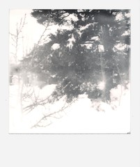 00002(5)1 (rubeninstant) Tags: polaroid land camera slr680 slr 680 polaroid680 impossible impossibleproject impossiblebarcelona filmisnotdead istillshootfilm instantfilm snowed snow forest winter freeze frame blackandwhite blackwhite bw wood trees