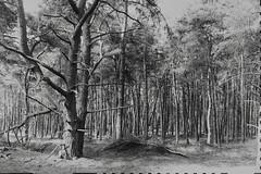 wood (polletjes) Tags: wood bos bois wald boom bomen tree trees arbre arbres baum baume bw black white grey grijs zwart wit zwartwit noir blanc gris natuur nature lente voorjaar spring frühling nederland netherlands