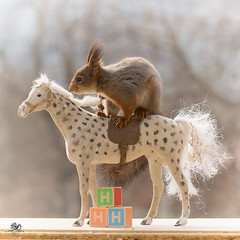 The capital H from horses (Geert Weggen) Tags: red nature animal squirrel rodent mammal cute look closeup stand funny bright sun backlight staring watching hold glimpse peek up tail message communication letter woodenframe capitals numbers learning school child education learn baby word alphabet teacher horse book happy geert weggen sweden jämtland ragunda bispgården