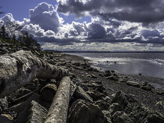 I feel spring in the air (Tony Tomlin) Tags: whiterock whiterockbeach bc britishcolumbia washingtonstate blainewashington driftwood ocean boundarybay