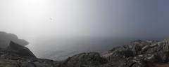 Ocean View... (bent inge) Tags: norway rogaland sola jæren vigdel bentingeask oceanview ocean seagull mist horizon march 2017