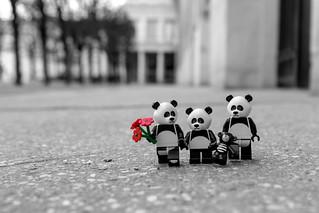 Panda Story (2/3) - Life