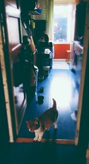Kitchen Cats ♥ (Peeano Photography - ピアーノ写真) Tags: cats cat home love warmth sweet peace