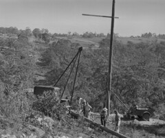 Installing poles at Ku-ring-gai, 1957 (Ausgrid photos) Tags: ausgrid kuringgai poles electricity