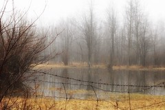 April showers... (s@ssyl@ssy) Tags: foggy misty rainy gloomy dismal spring floodingthefarmersfields puddles notapond reflection goingbacktodayallsnowcovered