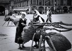 (juan.esspinosa) Tags: bn monjas street calles zocalocdmx hormigas