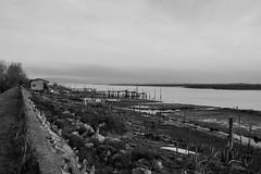 Punta Barene. Point Barene. (omar.flumignan) Tags: punta barene point quarantia canale channel bw blackwhite biancoenero bianco nero black white canon eos 7d ef24105f4lisusm