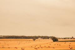 _Q9A5443 (gaujourfrancoise) Tags: france southwest sudouest charente fields champs été summer ocher ocre
