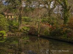 Clyne Gardens 2017 04 07 #4 (Gareth Lovering Photography 3,000,594 views.) Tags: clyne gardens swansea park olympus omdem10ii 14150mm garethloveringphotography