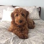 Maggie's Past Puppies !