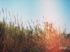 22. (Gatosaurio) Tags: love serious happy smile parelló wild wind hair eyes pez de ojo fisheye linda beautiful gorgeous pretty lips rubia blond chica mujer woman girl noche night loch lago lake winter invierno wave olas sand arena fumar cigarro chico hombre barba gafas glasses sunglasses hands smoke cigarette beard boy man bw blackandwhite white black backlight blue azul naranja orange españa valencia albufera agua water sunset atardecer crepúsculo twilight sun playa beach landscape paisaje pic foto photo