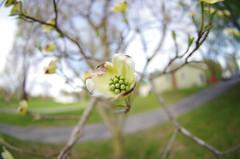 Spring (justin.hamblin) Tags: 1017 pentax macro ultra wide spring green