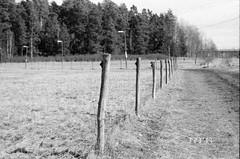 fence posts (Mister.Marken) Tags: nikonf4 kodak 400tx nikonmf22databack sweden madeinsweden blackandwhite nikonnikkoraf3580mm